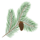 Pine cone with pine needles — Stock Vector