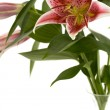 Pink lily in a vase over white backgroun — Stock Photo