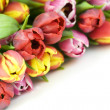 Fresh tulips — Stock Photo #1254163