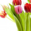 Bouquet of the fresh tulips — Stock Photo #1254174