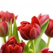 Fresh tulips — Stock Photo #1254246