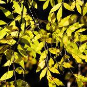 Autumn fall leaves — Stock Photo