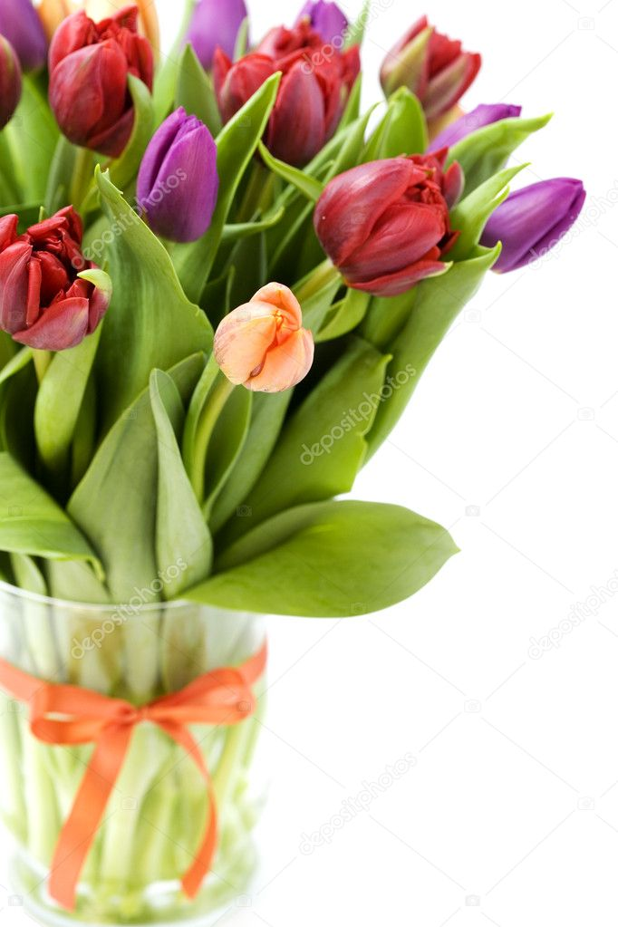 Fresh tulips on white background — Stock Photo #1254264