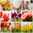 Royalty-Free Stock Photo: Beautiful tulips collage