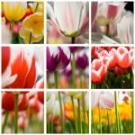 Beautiful tulips collage — Stock Photo #1262714