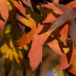 Royalty-Free Stock Photo: Autumn fall leaves