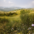 Alpine meadow — Stockfoto