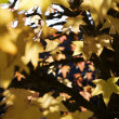 feuilles dautomne — Photo