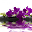 Stock Photo: Beautiful purple orchid
