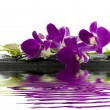 bela orquídea roxa — Foto Stock