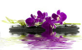 Beautiful purple orchid — Stockfoto