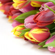 Bouquet of the fresh tulips — Stock Photo #1703529