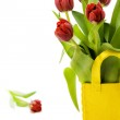 Fresh tulips — Stock Photo #1703665