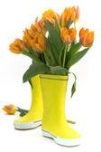 Botas de lluvia y tulipanes frescos — Foto de Stock