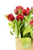 Tulipanes frescos — Foto de Stock