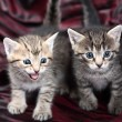 Two Small Kitten on a black-red - Stock Photo