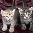 Stock Photo: Two Small Kitten on a black-red