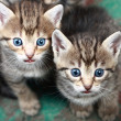 Stock Photo: Two Small Kitten. Photo.