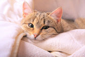 Funny looking cats face close-up — Stock Photo