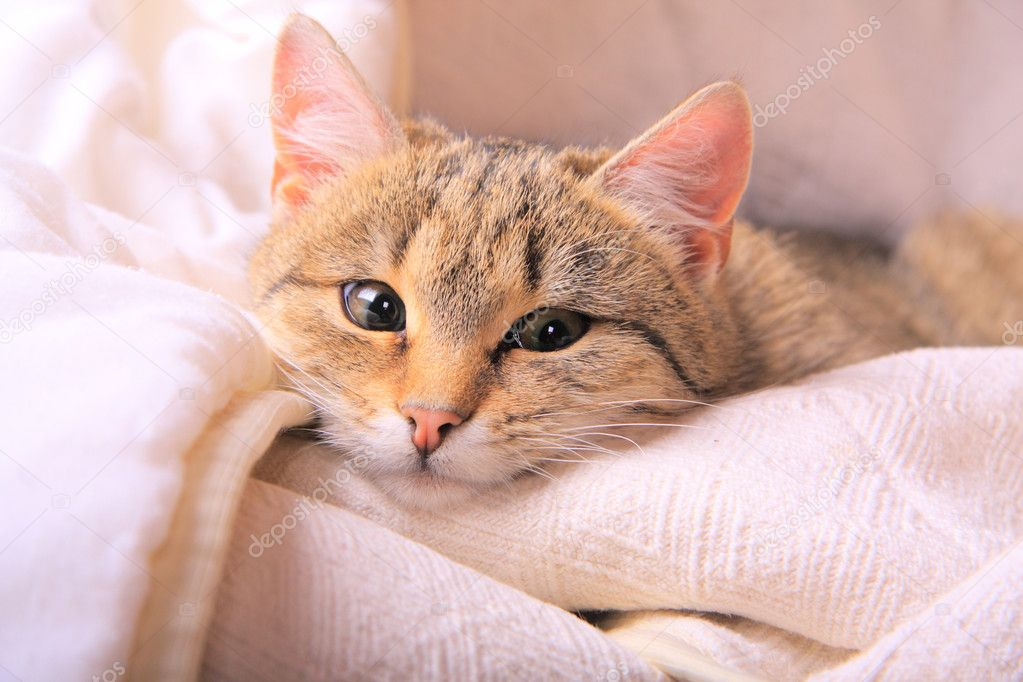 Funny looking cats face closeup  Stock Photo #1282355