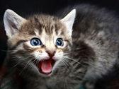 Small Kitten. — Stock Photo