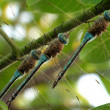 The dragonfly sits on a branch — Stockfoto