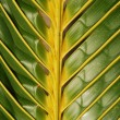 Stockfoto: Vibrant coconut palm tree detail/backgro