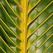 图库照片: Vibrant coconut palm tree detail/backgro