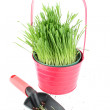 Trowel and grass — Stock Photo
