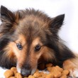 Eating dog — Stock Photo