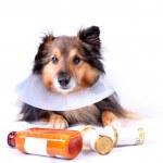 Больную собаку — Стоковое фото