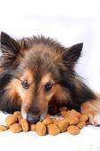 Eating dog — Stock Photo
