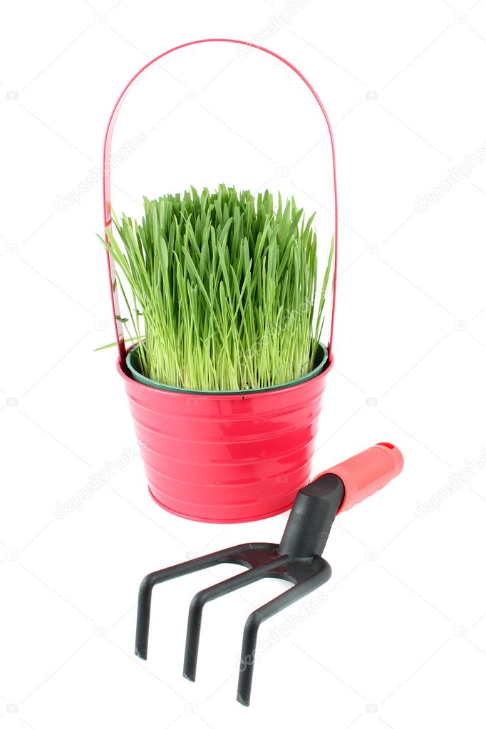 Potted green plant and cultivator for gardening on a white background  Stock Photo #1242834