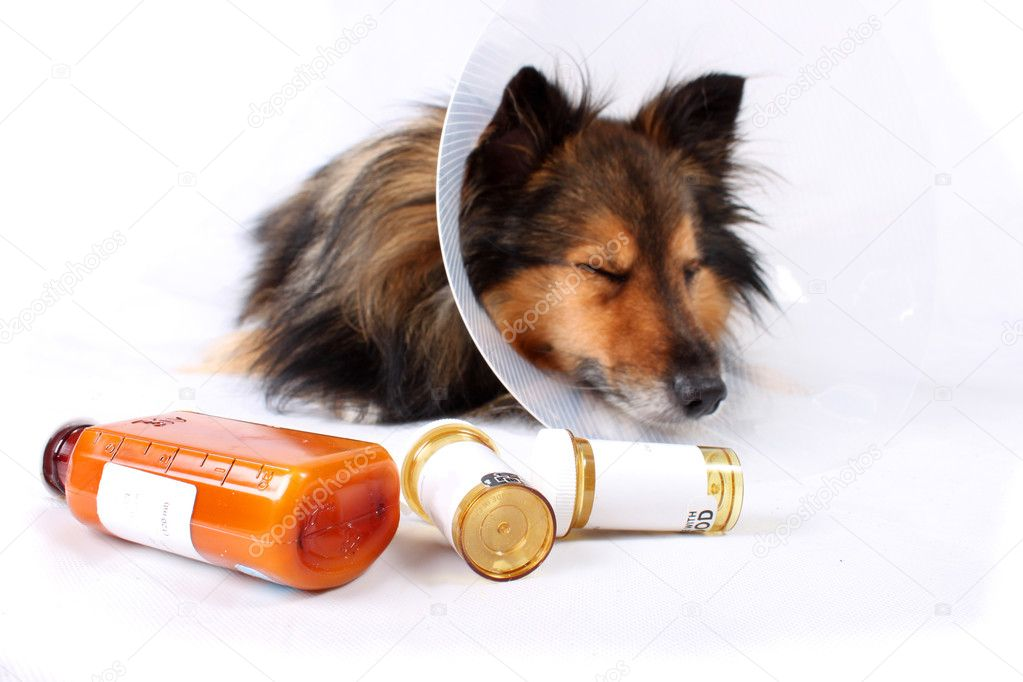Sick Sheltie or Shetland sheepdog with dog cone collar and medicine bottles in the foreground (NOT ISOLATED) — Stock Photo #1243977