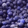 Delicious frozen wild blueberries — Stock Photo