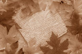 Sepia leaf background — Stock Photo
