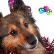 Christmas dog — Stock Photo #1981092