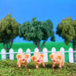 Stock Photo: Three little pigs