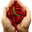 Hot chili pepper in the hands - Stock Photo