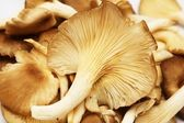 Group of raw mushrooms. — Stock Photo