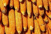 Dry yellow corn — Stock Photo