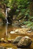 Waterfall in the jungle. — Stock Photo