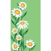çiçek — Stok fotoğraf