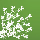 Clover foliage — Stock Photo
