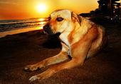 犬, — ストック写真