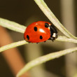 Stock Photo: Lady bug on leaf