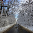 Country road in the winter — Stock Photo