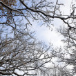 Frozen branches against the blue sky — Stock Photo