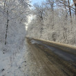 Stock Photo: Country road in winter