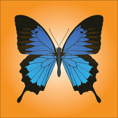 Papilio Ulysses butterfly — Stock Vector